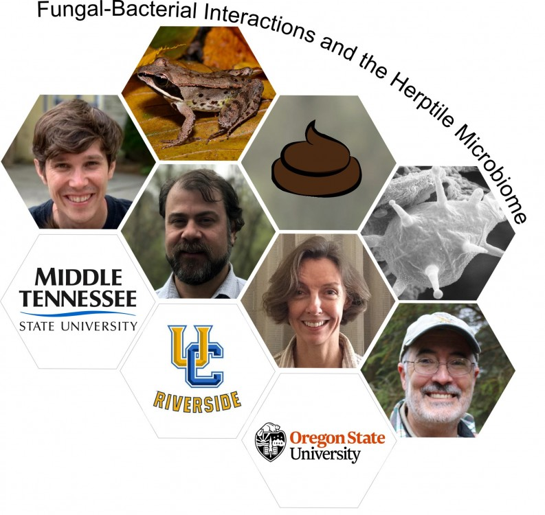 Fungal-Bacterial Interactions and the Herptile Microbiome