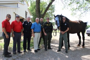 Rutherford County Sheriff's Mounted Patrol horses