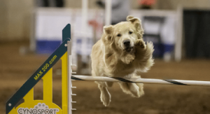 Cynosport World Games Dog Agility Championship